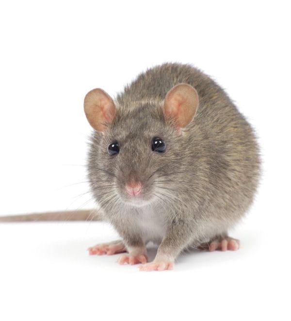 les boules anti mites marchent aussi pour les souris vos astuces pour se d barrasser des. Black Bedroom Furniture Sets. Home Design Ideas
