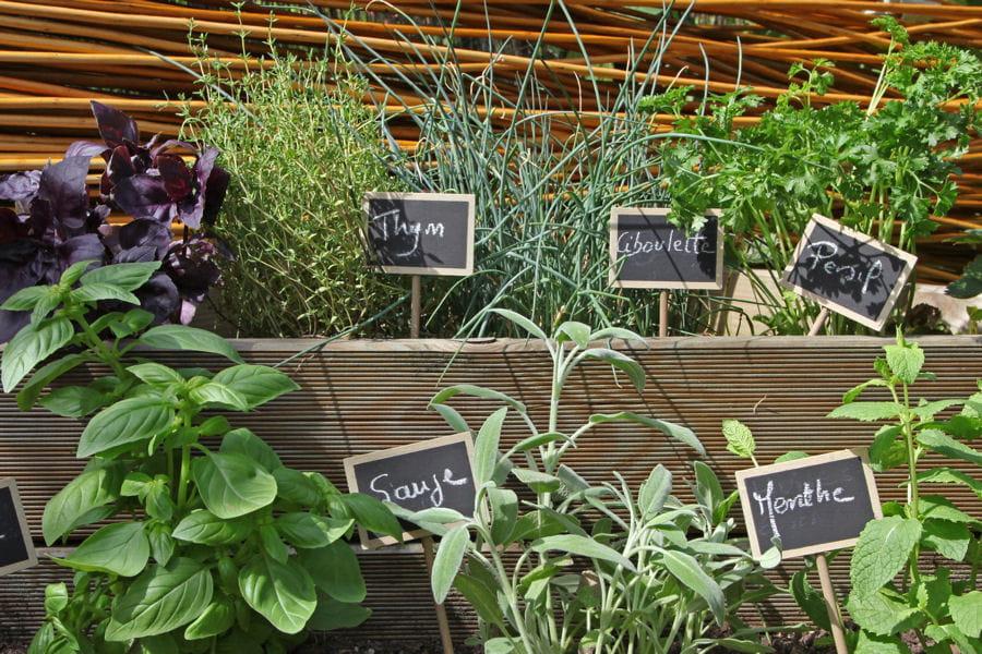 Des Herbes Aromatiques Am Nager Un Balcon Des Conseils De Pro Linternaute