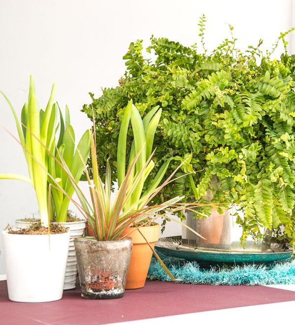 misez sur les plantes vertes bien d polluer l 39 air de