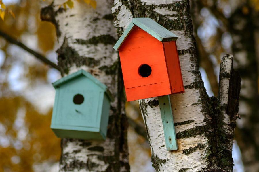 fabriquer un nichoir oiseaux des astuces d co pour la terrasse ou le jardin linternaute. Black Bedroom Furniture Sets. Home Design Ideas