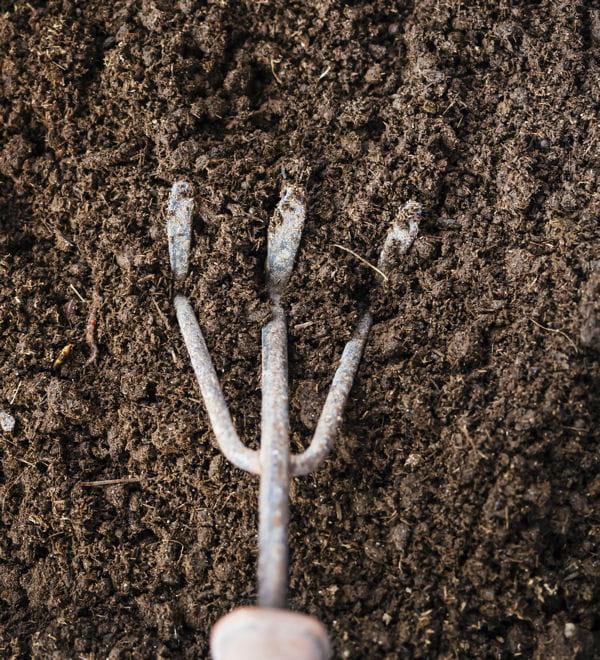Enrichissez la terre de votre jardin cendre de bois 10 for Cendre de bois dans le jardin
