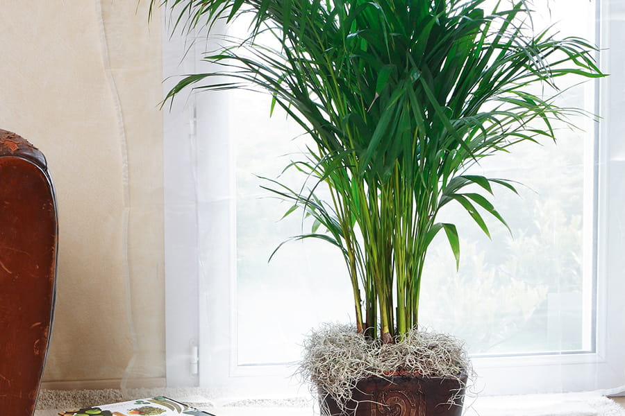 Ces plantes d polluantes pour votre int rieur for Plantes interieurs