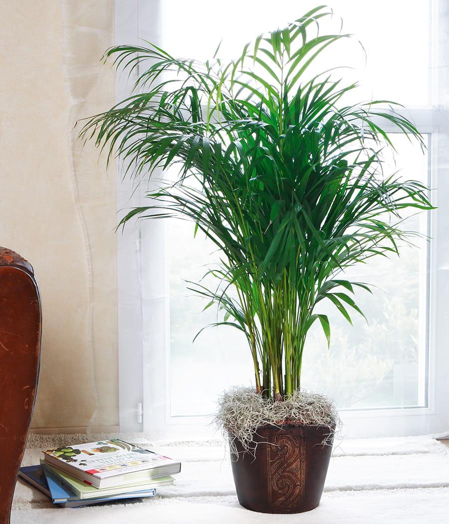 l 39 ar ca un des plus beaux d polluants. Black Bedroom Furniture Sets. Home Design Ideas