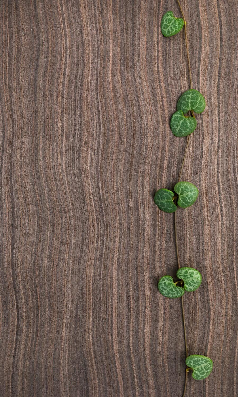 Le ceropegia woodii la plante grasse grimpante 15 - Quelle plante pour une chambre ...