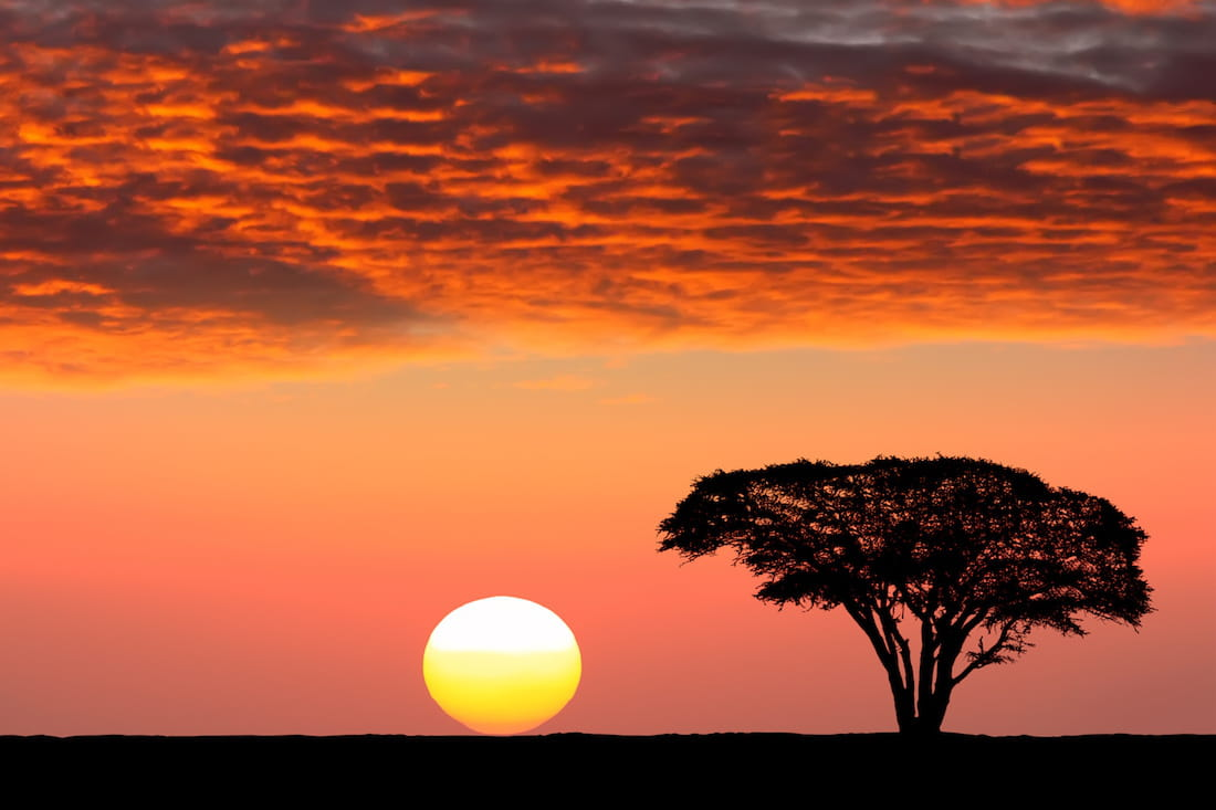 le parc national du serengeti en tanzanie. Black Bedroom Furniture Sets. Home Design Ideas