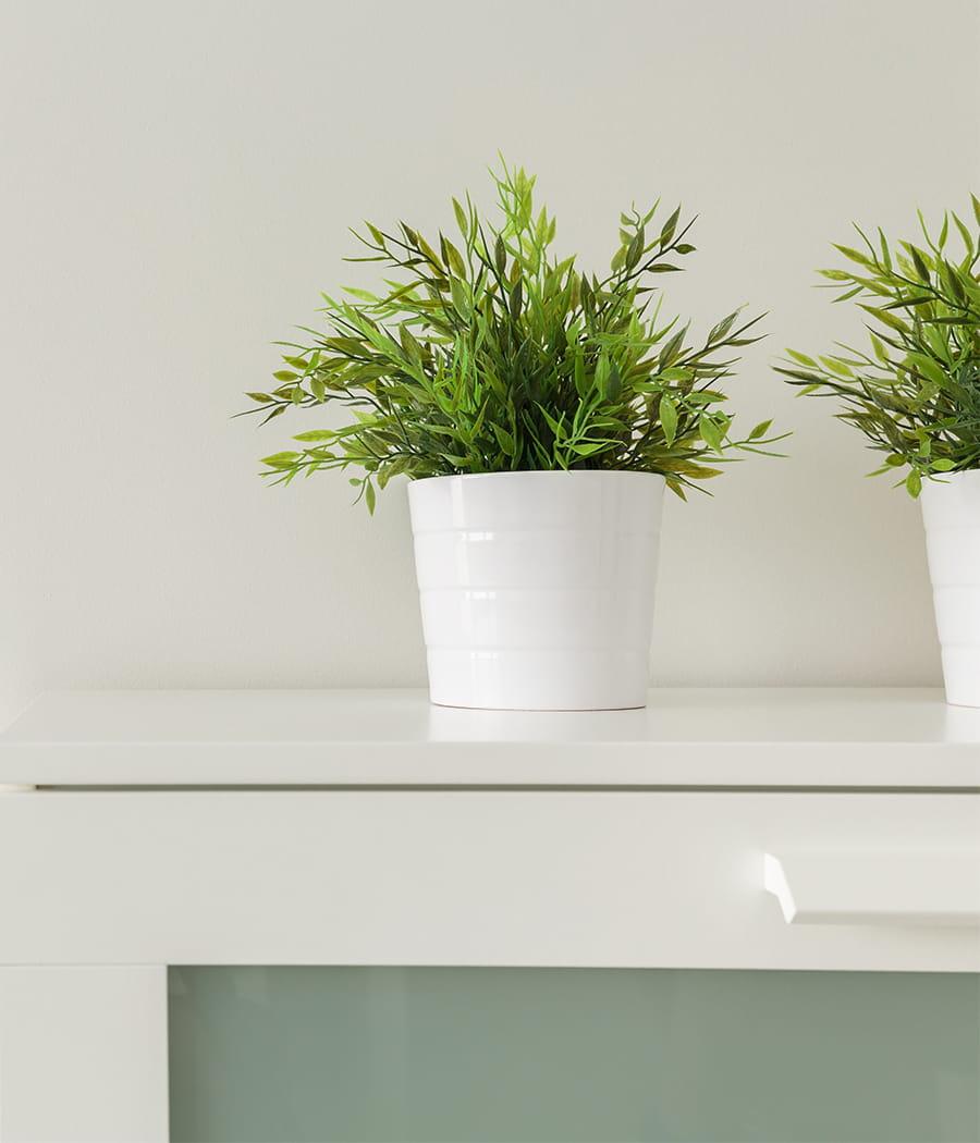 dormir avec des plantes d polluantes objectif mieux dormir 20 conseils pour la chambre. Black Bedroom Furniture Sets. Home Design Ideas