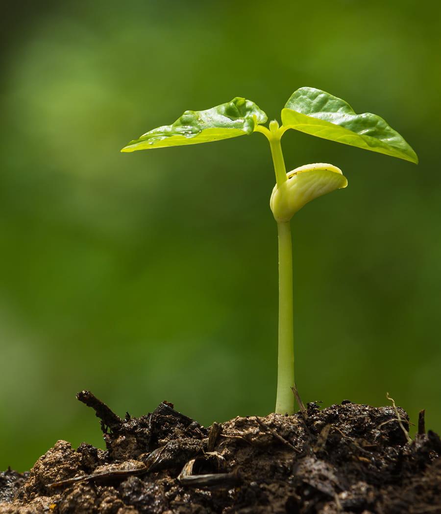 la pourriture des racines plantes ab m es reconna tre les maladies et les soigner linternaute. Black Bedroom Furniture Sets. Home Design Ideas