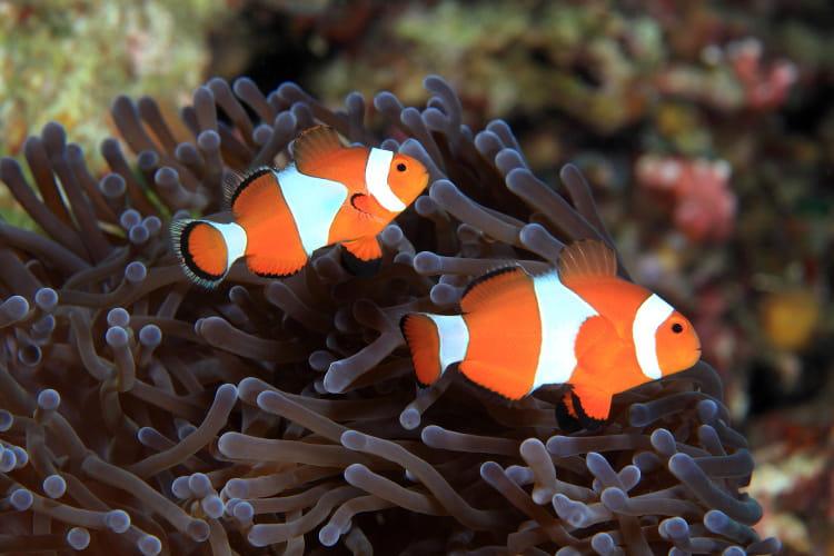 aquarium sea des r 233 ductions apr 232 s 16h sortir par cher les bons plans 224 travers la