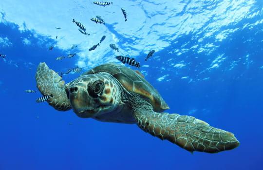 Photo de tortue en contre-plongée