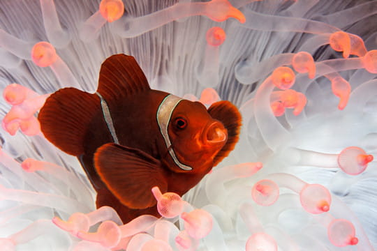poisson surpris