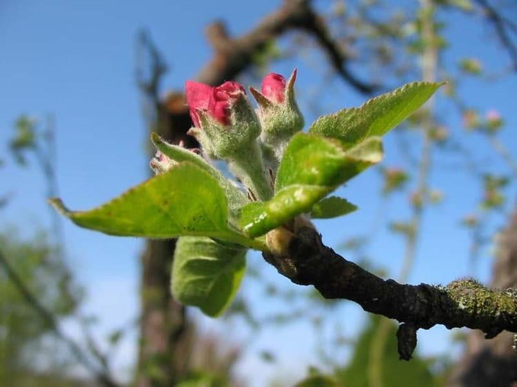 quinoxe de printemps la date du premier jour du printemps