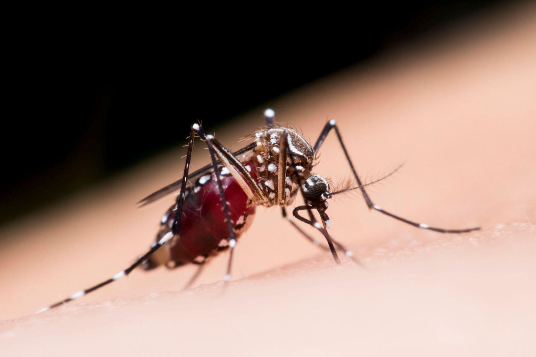 31 astuces et rem des efficaces pour dire adieu aux moustiques - Se debarrasser des moustiques ...