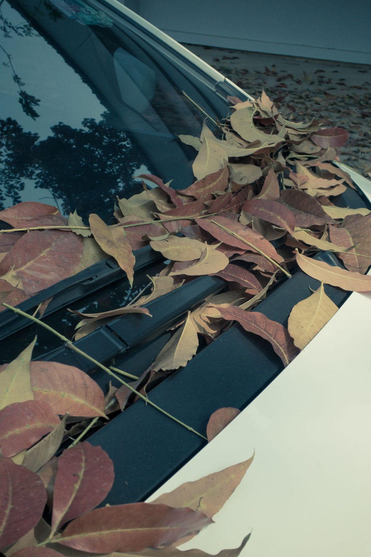 comment enlever des taches de feuille sur votre voiture des astuces pour nettoyer et prendre. Black Bedroom Furniture Sets. Home Design Ideas