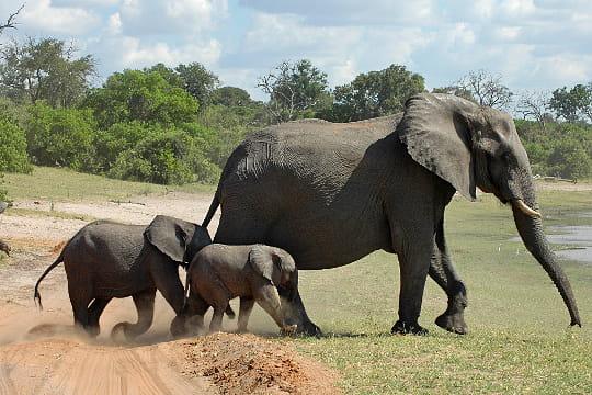 D Elephant Menu Passage protég...