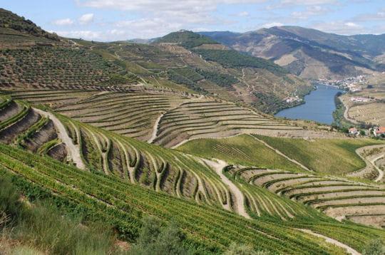 La vallée du Douro et ses vignobles