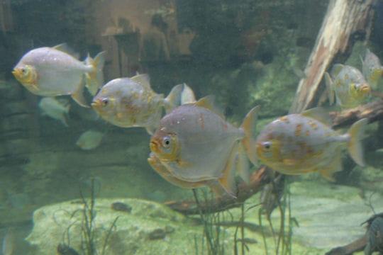 Des esp ces insolites d couvrir l 39 aquarium de paris for Aquarium insolite