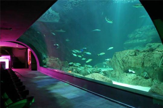 l 39 aquarium o il y a de magnifique poissons enfin presque xd. Black Bedroom Furniture Sets. Home Design Ideas
