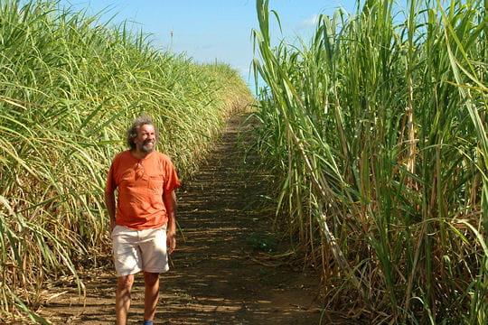 antoine dans les champs de canne  u00e0 sucre   antoine  u00e0 l u0026 39  u00eele