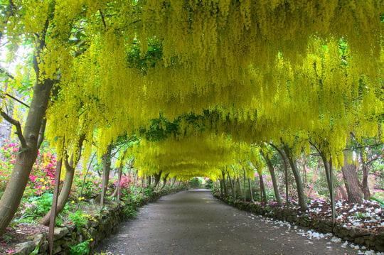 Le jardin de bodnant au royaume uni balade dans les plus for Beaux arbres de jardin