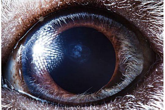 Un objectif macro pour les yeux