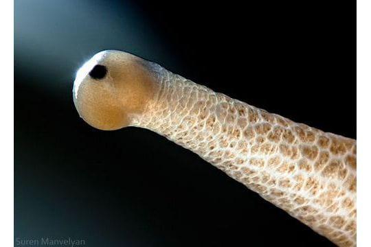 Tous types d 39 animaux macrophotographie dans les yeux des animaux li - Tout type ou tous types ...