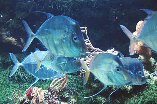 l aquarium de la rochelle visite des tr 233 sors de poitou charentes linternaute