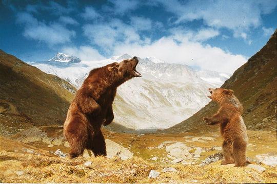 Bart et Youk : Ces animaux célèbres - Linternaute