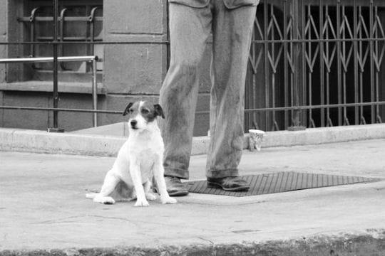 Uggie le chien : Ces animaux célèbres - Linternaute
