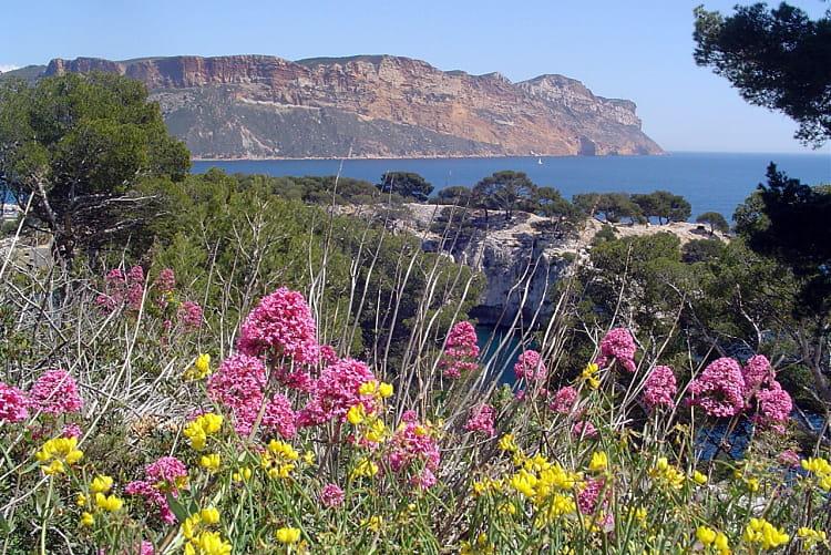 La Flore Des Calanques Le Parc National Des Calanques