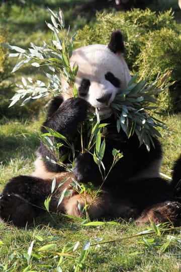 yuan zi et son activité préférée