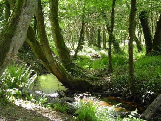 guide de voyage morbihan : forêt de brocéliande