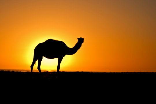 Dromadaire devant le couchant ces magnifiques couchers de soleil linternaute - Coucher du soleil montpellier ...