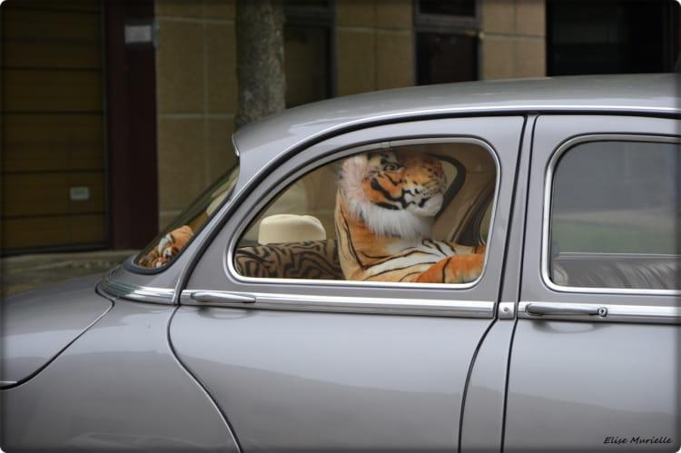 1321295-le-tigre-n-est-pas-dans-le-moteur