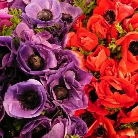 quelles fleurs offrir pour exprimer la haine ou une rupture quelles fleurs offrir en quelles. Black Bedroom Furniture Sets. Home Design Ideas