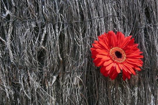 la fleur rouge vos plus belles photos hautes en couleurs linternaute. Black Bedroom Furniture Sets. Home Design Ideas