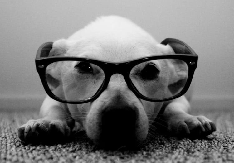 chien aux lunettes vos plus belles photos en noir et blanc linternaute. Black Bedroom Furniture Sets. Home Design Ideas