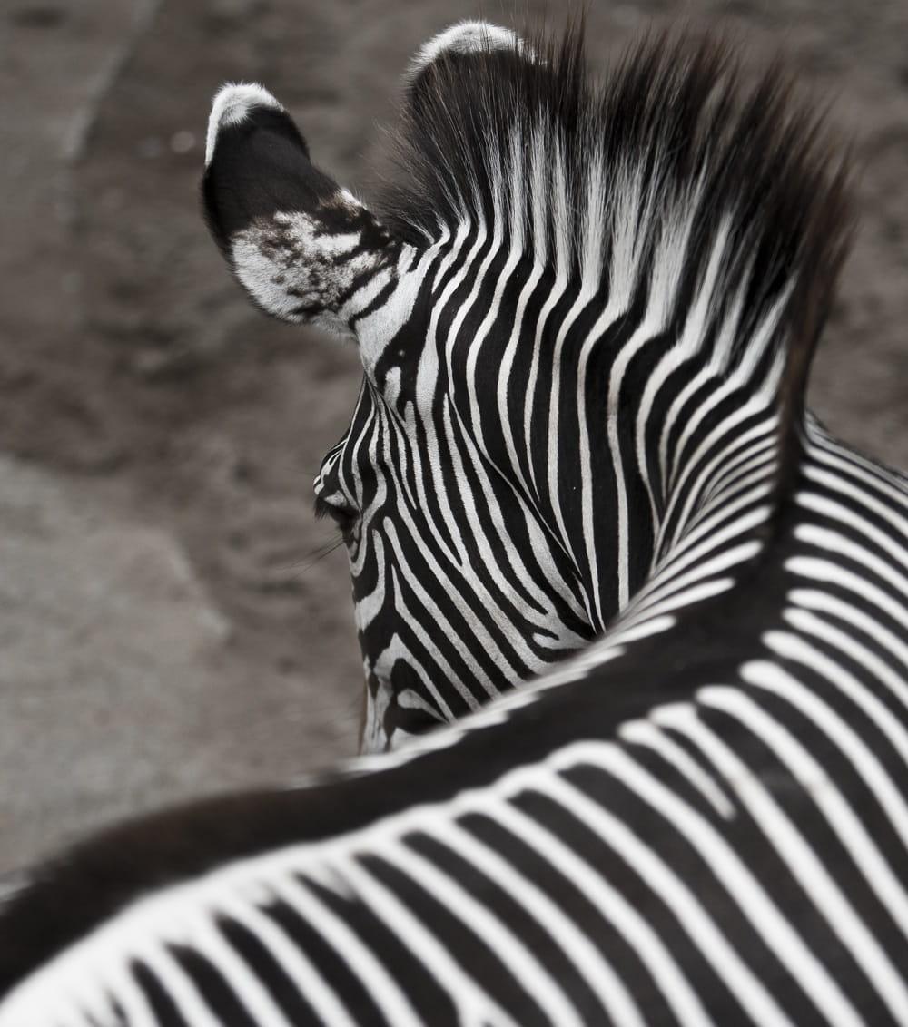 noir et blanc ou blanc et noir vos plus belles photos en noir et blanc linternaute. Black Bedroom Furniture Sets. Home Design Ideas