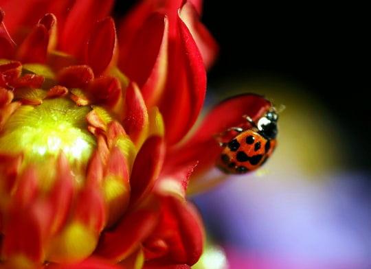 bonjour mars 1606556-50-photos-aux-couleurs-du-printemps
