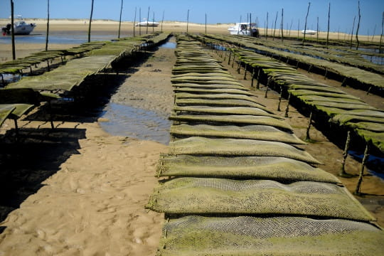 bassin d'arcachon : parcs ostréicoles