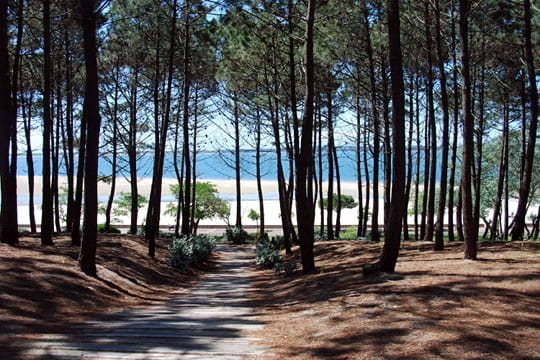 bassin d'arcachon : forêt landaise