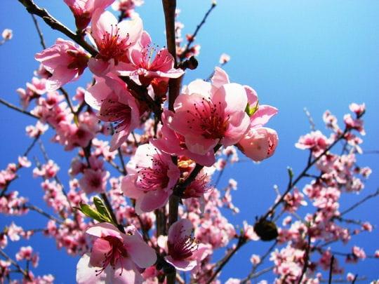 Jeu de saison ! - Page 6 1609551-printemps-fleuri