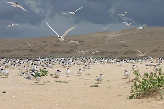 Bassin d'Arcachon : Réserve Ornithologique du Teich
