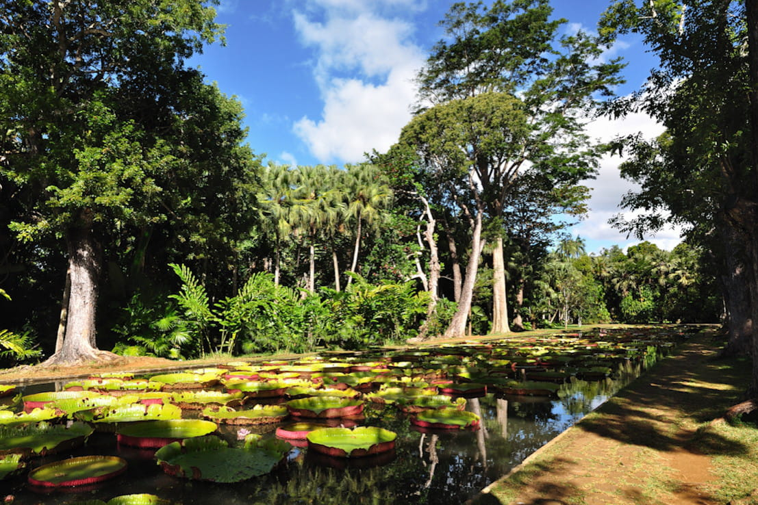 Le jardin pamplemousse havre de paix au paradis les 15 for Jardin pamplemousse