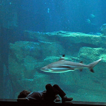 aquarium du grand lyon les 15 plus beaux aquariums de linternaute