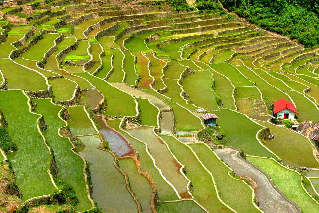 Les vertes rizi res des philippines une plan te de - Toutes les couleurs vertes ...