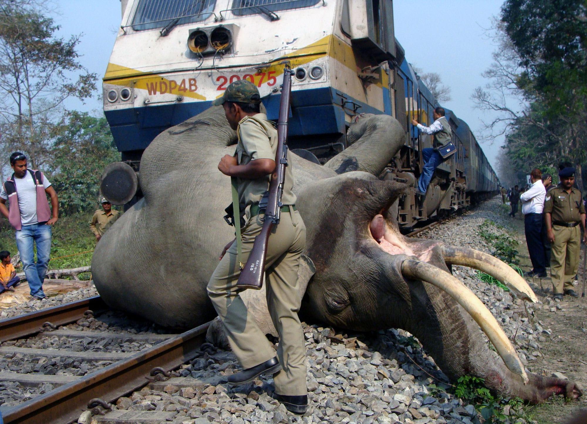 Смотреть хуй слон 21 фотография