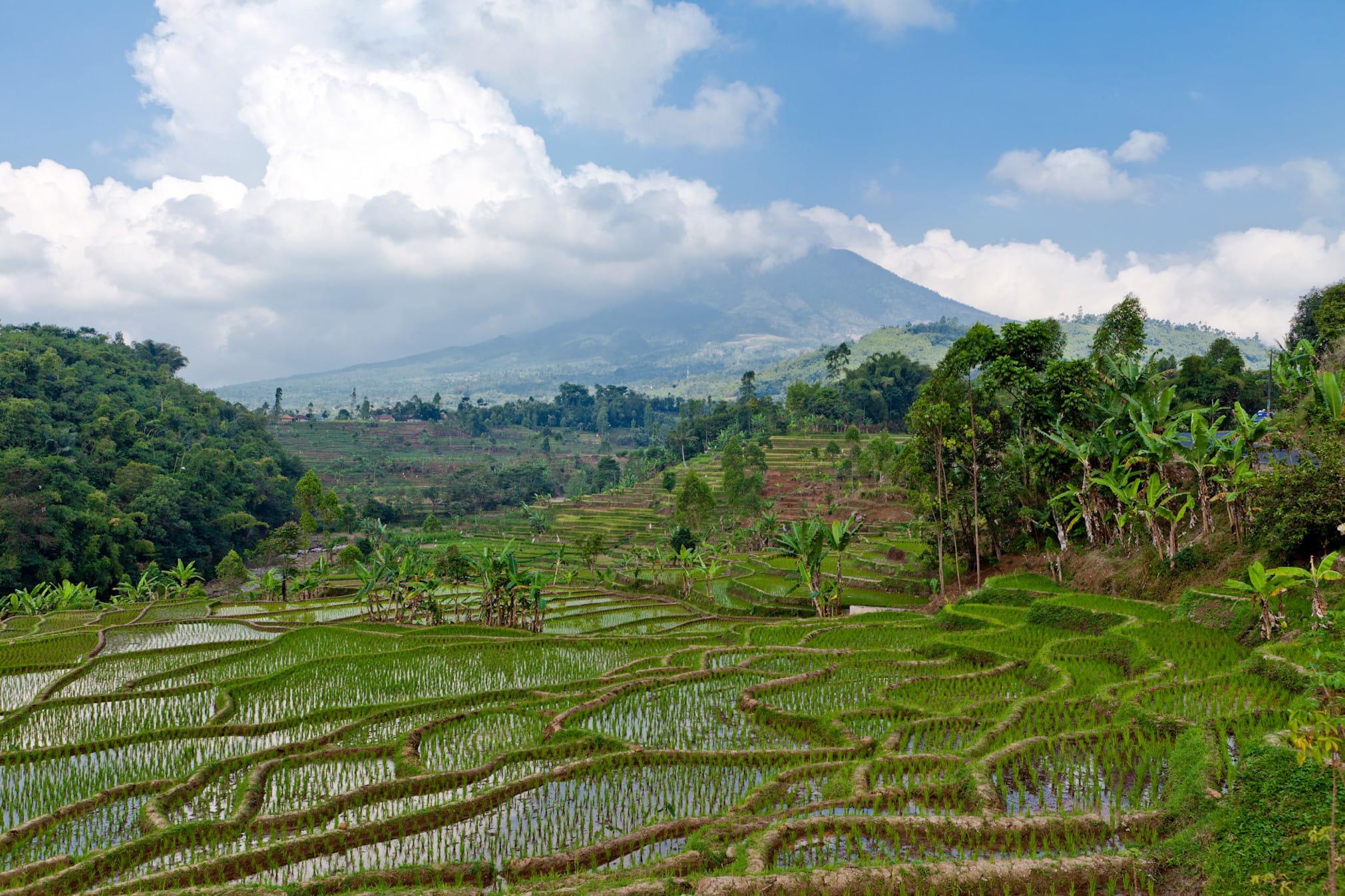 Les rizi res en terrasses de bali l 39 indon sie comme vous for Les jardins de bali