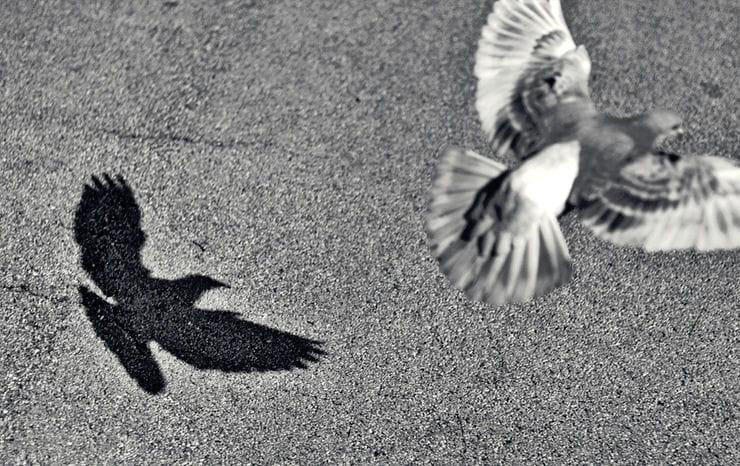 L 39 envol du pigeon vos plus belles photos en noir et for Signification du noir et blanc