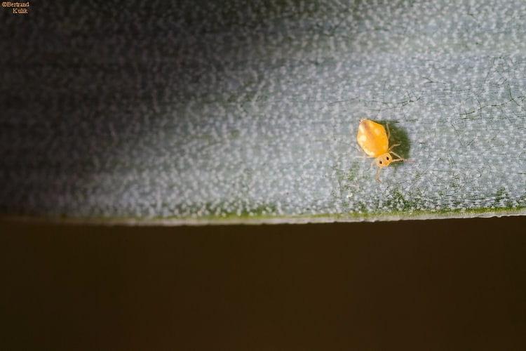 all la terre ici les insectes vos photos au timing parfait linternaute. Black Bedroom Furniture Sets. Home Design Ideas