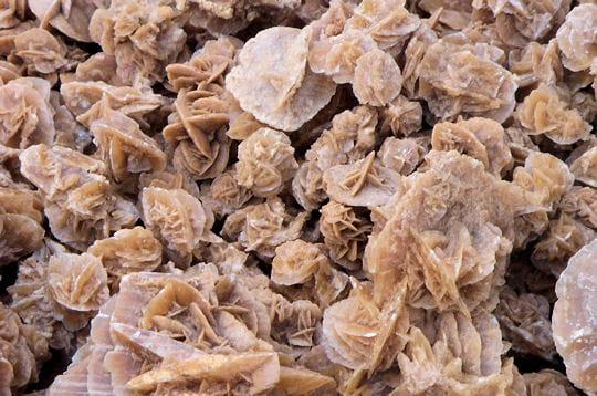 Le refuge de la louve intrépide - Portail 223687-les-roses-des-sables